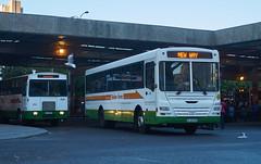 Buses Leaving Cape Town (jayayess1190) Tags: city urban man bus publictransportation capetown vehicle commuter passenger masstransit goldenarrow