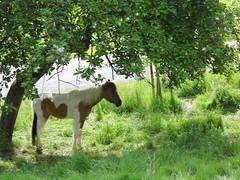 Ein Pferd im Sonnenschein (ute_hartmann) Tags: pferd tier