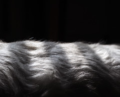 Something stripy (velvetmeadow) Tags: shadow blackandwhite bw dog abstract texture monochrome animal backlight fur pattern stripes stripy velvetmeadow