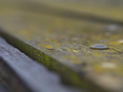 rivet (Cosimo Matteini) Tags: pen dof olympus lichen rivet shallowdof m43 mft ep5 cosimomatteini mzuiko45mmf18