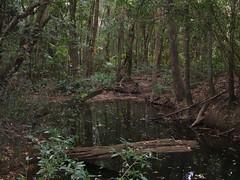 DSCF7012 (SEQ Catchments) Tags: rainforest subtropical lowland