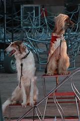 IMG_4302 (Brynn Thorssen) Tags: al colorado circus performance may jordan springs co 18 2012 bigtop may18 kaly jordancircus alkalycircus