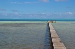 DSC_0847 (jirikoo) Tags: ocean flowers blue sea france beach water coral french island volcano polynesia shark boat sand pacific crystal stingray peak lagoon palm canoe exotic southpacific tahiti bounty tropics borabora moorea polynesian frenchpolynesia