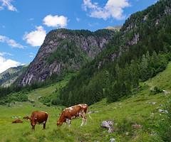 Khe und Berge (brunoremix) Tags: sterreich alpen hohe pinzgau tauern bramberg kitzbheler