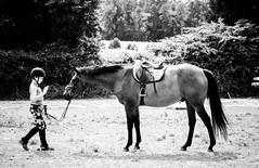 P5200601.jpg (DWO630) Tags: horses blackandwhite bw horse white black monochrome virginia olympus richmond va rva varina compactcamera m43 henrico primelens balmullofarm seriouscompacts micro43 olympus45mm18 em10ii