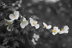 Flowers stand out from the gray. (Joseph Heffernan) Tags: flowers kew gardens gray whit