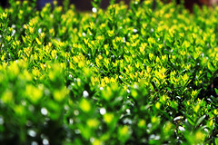 IMG_9232Ax (kanizfotolio) Tags: macro tree green nature closeup canon lens eos spain europe dof granada kits 500d