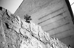 Minolta Hi-Matic G - Ghetto Plant (Kojotisko) Tags: bw streetphotography brno creativecommons czechrepublic streetphoto vx400 konicamonochromevx400 minoltahimaticg konicamonochrome