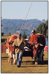 Llegando con estilo ([MKDO]) Tags: mapuche araucania puerto saavedra chile gente people rural rustico life libre airelibre free freelance colores colorful colorfull portrait calido
