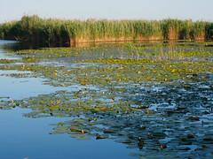 FO160616_6160033.jpg (Fernando Ortega C.) Tags: paisaje humedales ecosistemas deltadeldanubio 00naturaleza 06viajes 2016deltadanubio