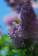 Syringa (Tamara Mahomedova) Tags: flowers light summer plant blur macro green fall nature up field grass leaves fairytale season landscape flora soft branch close bright bokeh outdoor downhill flare daisy dreamy wildflowers blooms clover magical shining depth catchy sparkling shimmering helios44 helios442