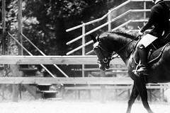 Forward (AlexRuz) Tags: show horses horse ride horseshow pvda dressageforlife teamwool teamcounty testrideacounty