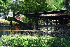 Lakeside Shack (Bob Hawley) Tags: asia kaohsiung taiwan nikond7100 outdoors lotuspond nikon50mmf14 buildings
