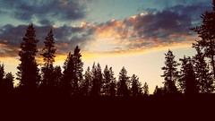 Midnightsun (torivonglory) Tags: trees night clouds finland finnland magic lappland lapland midnight bume midnightsun arcticcircle nosunset luosto