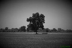 Lone Tree in SouthEast Michigan (SCOTTS WORLD) Tags: trees light shadow summer sky blackandwhite sunlight nature monochrome field grass leaves june clouds rural america landscape fun midwest angle pov michigan country perspective panasonic adventure modified processed vignette lonetree 2016