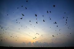 #Flcikr12Days (Madhusudanan Parthasarathy) Tags: morning sky sun india beach clouds sunrise dance nikon flickr pigeons ngc sigma best 1020mm chennai silhoutte tamilnadu 2013 d5100