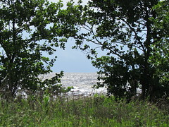 stra Stranden Halmstad Sweden (Lynsnowsun) Tags: ocean blue sea summer sky cold colour tree cute green beach nature water beautiful grass weather clouds grey big scary sand sweden many small picture windy stormy halmstad halland wawes stra