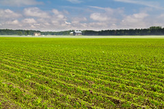 Bayfield Bean Field (Jack Pal) Tags: ontario places bayfield sunsetpoint