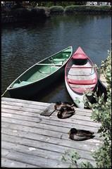 Ducks and Boats (b.keelerfoster) Tags: california art film water birds 35mm photography la photo losangeles dock ducks canoe nikonfm10 venicebeach kodakportra160vc venicecanals 50mmlens nikonserieselens nikonserieslens