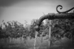 TAP (justin pohl) Tags: old justin summer blackandwhite bw sun white black tree nature water monochrome beautiful canon photography photo snapshot vine pic daily minimal jp minimalism tap waterdrops simple bnw spigot routine baw keepitsimple pohl 700d dropdrop monoart