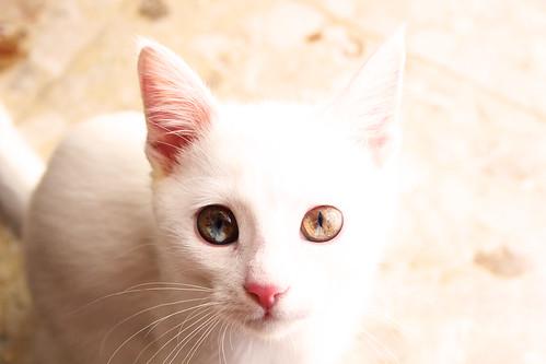 Eyes Wide Cat