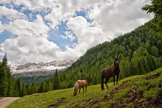 Liberi cavalli