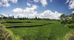 Impok_D130807T044359_ICT03089-03093 (Impok) Tags: indonesia banglibali