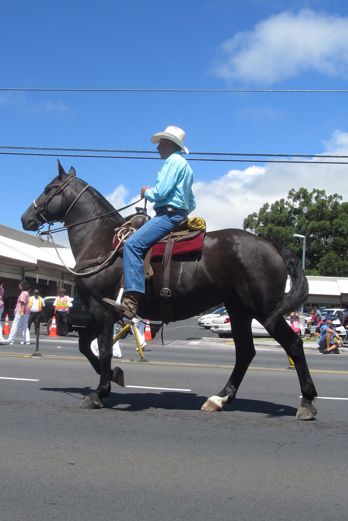 6e986a4d tall in the saddle (BarryFackler) Tags: horse hat hawaii polynesia cowboy  parade lei