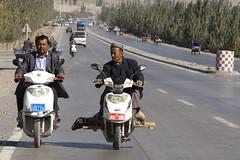 2012101_402 (expatmonkey) Tags: china animal market kashgar bazaar
