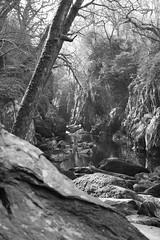 Moody valley (lesage1981) Tags: uk trees plants nature water beautiful wales rocks glenn fast fairy valley streams flowing