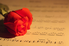 Rose and Music (Tuuan Anh) Tags: old wedding red music flores flower art texture love floral rose yellow vertical composition canon vintage paper golden design education key notes symbol bass song amor background parchment romance retro note melody musical staff card solo page sound classical sheet educational bud brochure score stave clef invitations treble oldfashioned compose pachelbel
