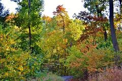 Central Park-North Woods, 10.26.13 (gigi_nyc) Tags: nyc newyorkcity autumn nature leaves centralpark fallfoliage northwoods