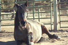 Nov072013_1319 (melaniebleu) Tags: ranch horse barn rural photography countryside mare country arena pony stables