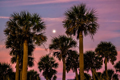 Moonset 02 (Jim Dollar) Tags: sc palmtrees moonset edistoisland jimdollar canon6d edistobeachstatepark