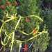 Trees_of_Loop_360_2013_015