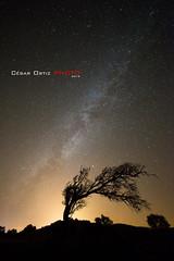 Silueta (Cesar Ortiz_) Tags: tree night canon de stars arbol noche valle via estrellas burgos mkii markii quintana lactea garoa merindades tobalina