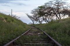Train tracks (Kurupt Hawaiian) Tags: oahu traintracks tracks koolina waianae kapolei