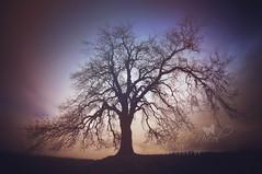 Tree (Samantha Nicol Art Photography) Tags: tree art silhouette branches dramatic samantha nicol