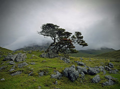 Goodbye - Bonsai in Skye (kenny barker) Tags: skye landscape scotland day cloudy explore landscapeuk panasonicg1 kennybarker