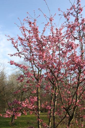 Unknown pretty tree blossom