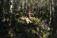 Quamby Bluff Track