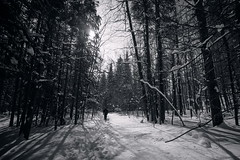 Memories of Winter 2 (byronjyu) Tags: trees winter bw white black zeiss forest landscape photography sony bruce trail yu scape byron a7 monocliffs distagon 21mm 2128