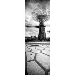 Vertical Extreme (JamCanSing) Tags: longexposure blackandwhite film pinhole 120film filter ilford bnw 6x17 reciprocity sfx200 supertrees hoya25 realitysosubtle