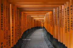 Inari Shrine  (Alpha 2008) Tags: japan kyoto gate shrine inari sony culture   alpha kansai    autofocus    fushimiinarishrine