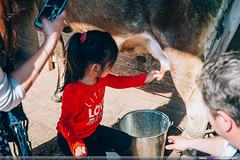Churchill Island Heritage Farm (Mio Marquez) Tags: travel family australia victoria churchill phillipisland sanremo thenobbies penguinparade koalaconservationcentre pelicanfeeding churchillislandheritagefarm tropicanamotorinn
