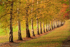 All In A Row (kelstar*) Tags: autumn trees newzealand leaves otago canon7d