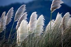 Wind (Isra Fuentes) Tags: lugares nuevazelanda oceana