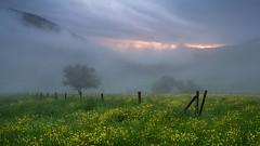 Springtime interruption (L.u.n.e.x.) Tags: sunset tree fog clouds fence germany haze sony meadow wiese heidelberg ziegelhausen frhling 2015 sonynexf3