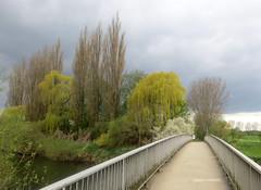 01-IMG_3172 (hemingwayfoto) Tags: wolken brcke fluss baum wetter weg pappel leine trauerweide leinemasch berquerung