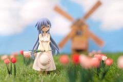 Tulips in the windKanata (edhutschek) Tags: anime windmill toy tulips manga figure izumi pvc kanata luckystar bfigure jfigure